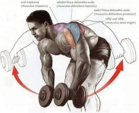 dumbbell-bent-lateral-raise