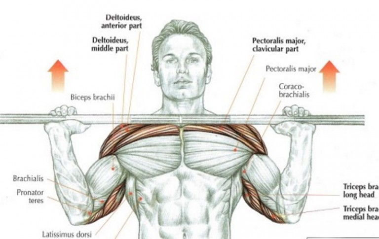 overhead-press-muscles-768x485