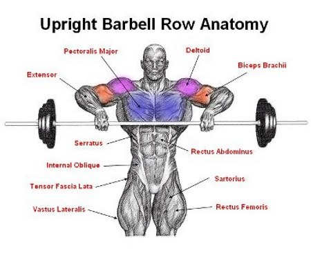 upright-row-front