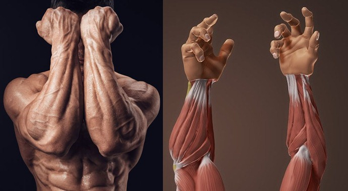 Workouts For Bigger Forearms