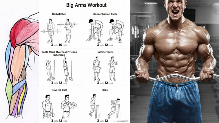 Top 10 Best Biceps Exercises