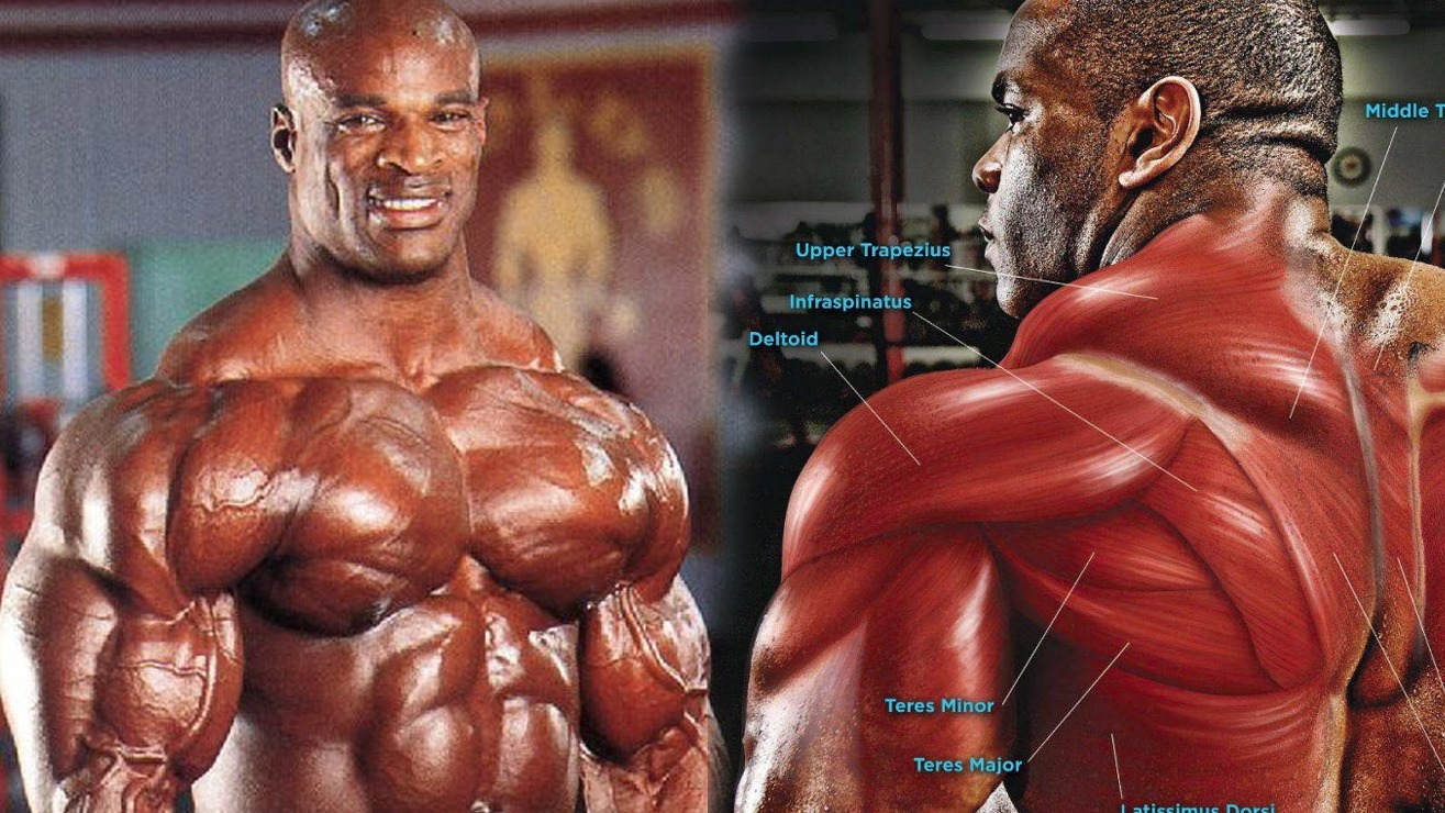 Top 4 Exercises For Building Bigger Traps Like The Pros